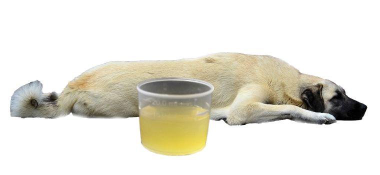 magen darmsanierung hund